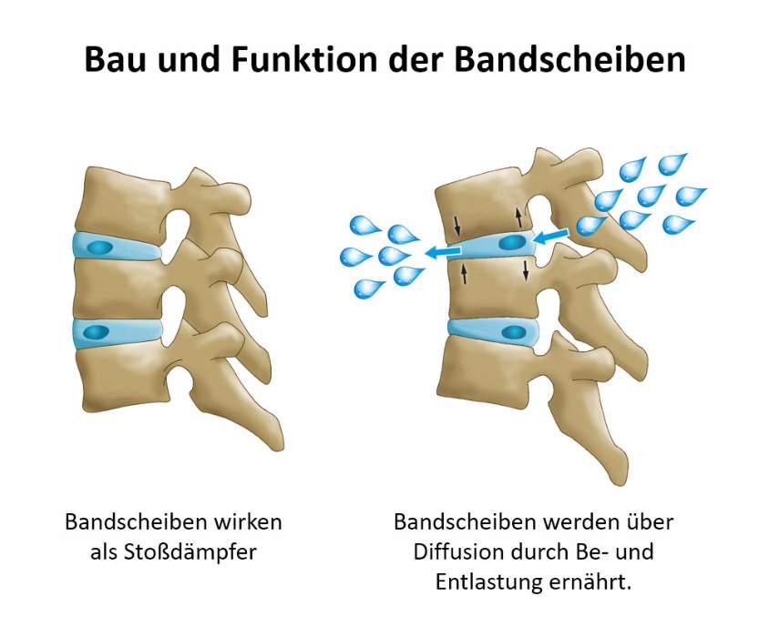 alphaSPINE - Anatomie der Wirbelsäule - Schmerztherapie in Bamberg